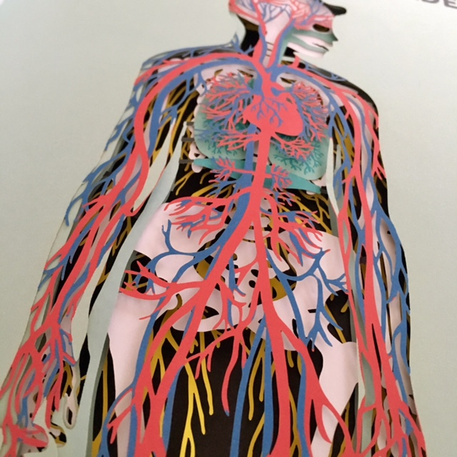Anatomie - De Verhalenwinkel