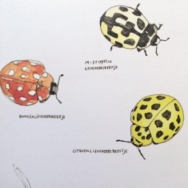 Pocket insecten boek-De Verhalenwinkel